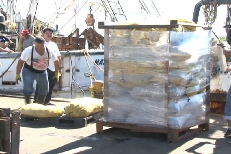 Producción de camarón cayó un 50%