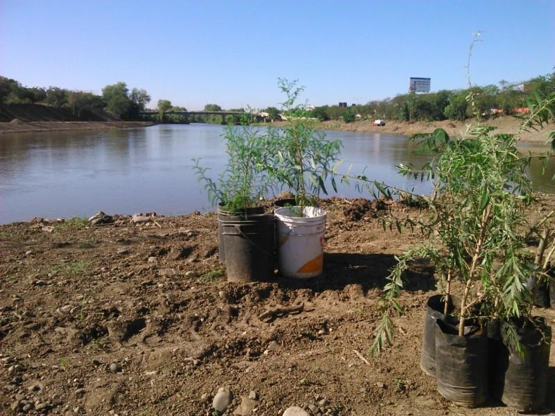 Reforestaran riberas de ríos en Culiacán