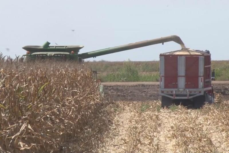 Preocupa a productores lento avance en programa de pagos de apoyos