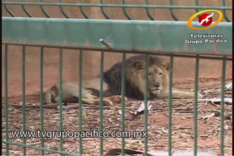 Resolverá Ayuntamiento problema territorial y situación del zoológico