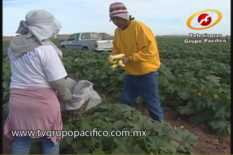 Deja descenso de temperatura pérdidas parciales en hortaliza