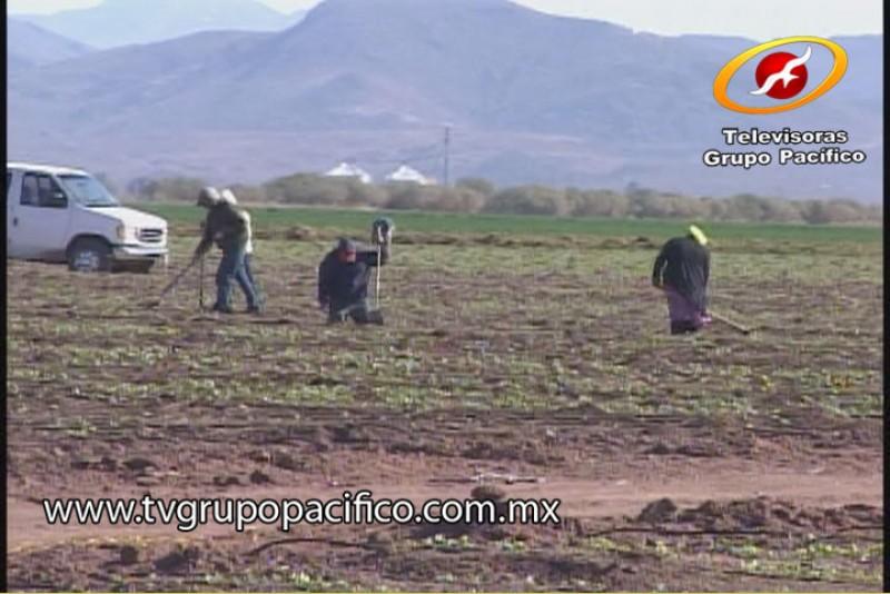 Urge reactivación de empleos agrícolas: CTM