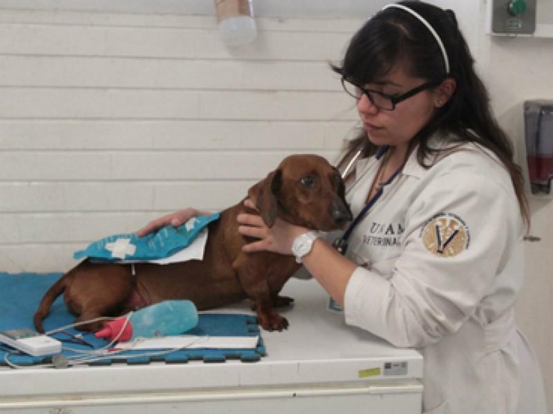 Primer banco de sangre veterinario de México está en Yucatán