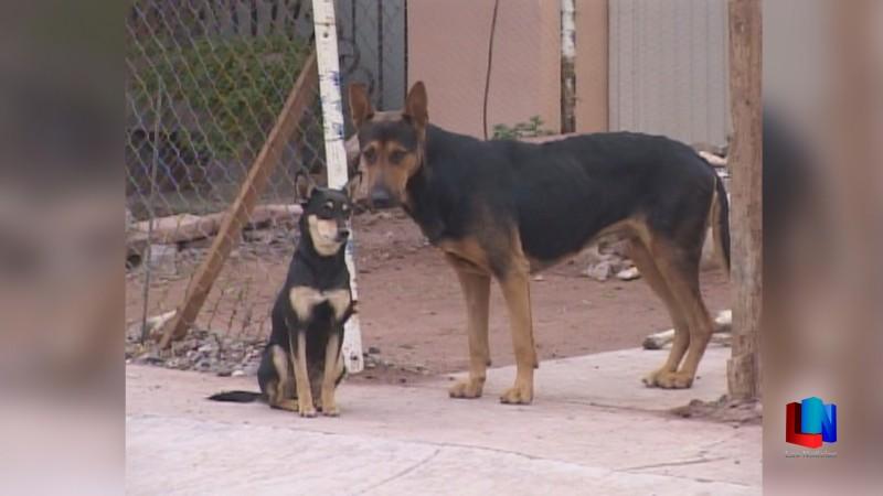 Cajeme debe aplicar Reglamento de Protección Animal: Palafox Celaya
