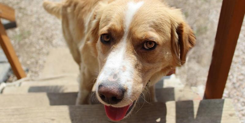 Arrestan a perro y su expresión se hace viral
