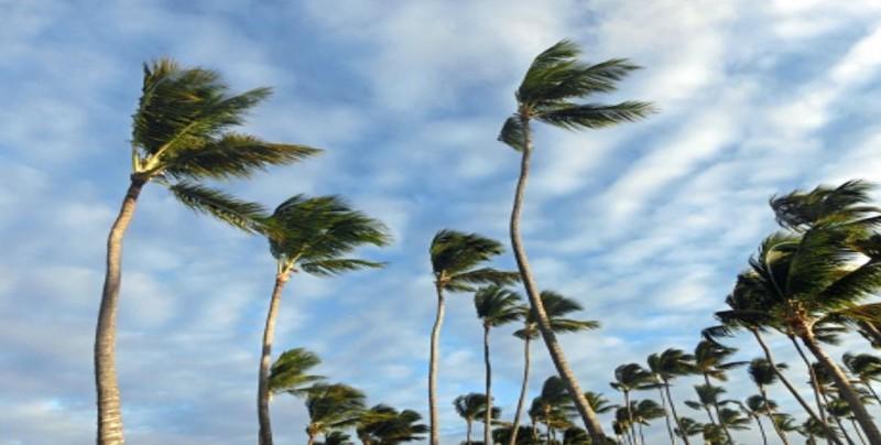 Vientos tiran árboles y postes en Veracruz y Boca del Río