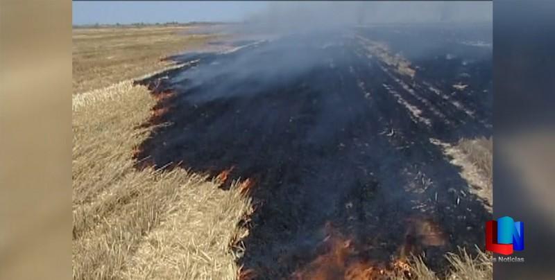 Piden a productores agrícolas no quemar la gavilla