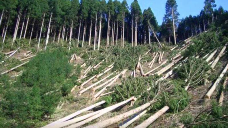 Necesaria la Procuraduría Ambiental de Sinaloa