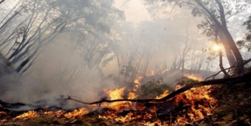 Suman 30 incendios forestales en lo que va del 2018