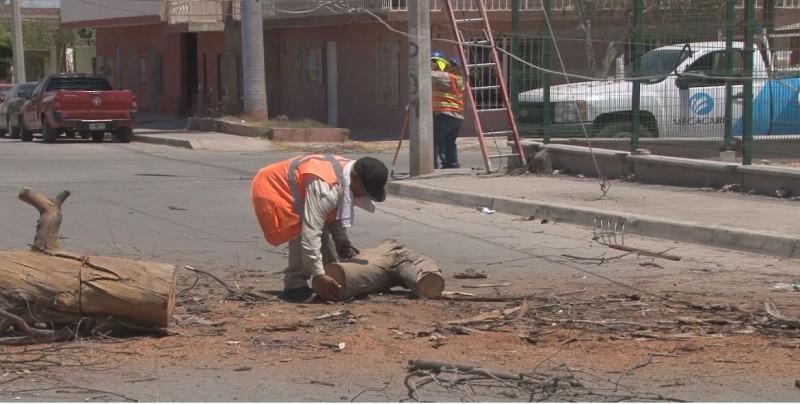 Caída de árbol deja sin electricidad a sector de la Zapata