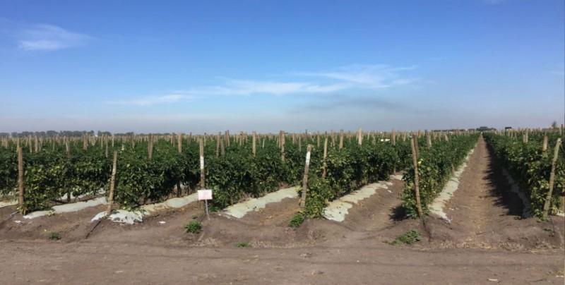 CESAVESIN hace un llamado a los productores hortícolas