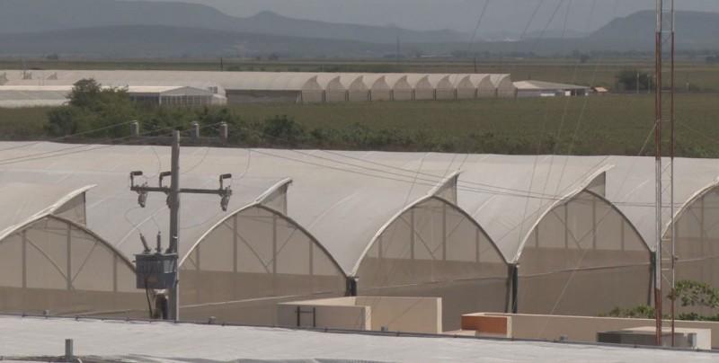 Altos costos de energía en el sector hortícola
