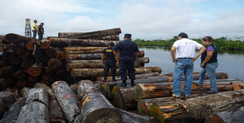 Más del 50 % de la madera comercializada en Brasil es ilegal, según Gobierno