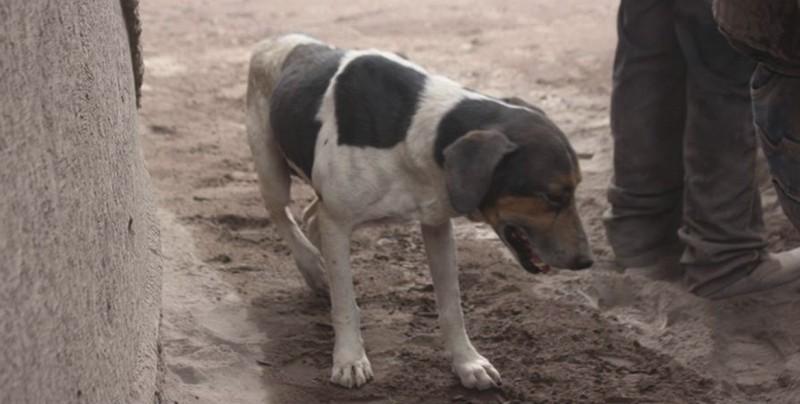 Perrito ayuda a encontrar a sus amos entre las cenizas en Guatemala