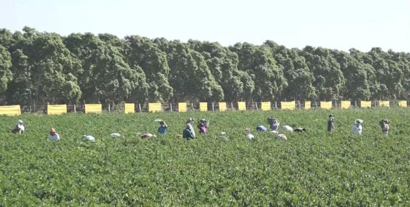 Trabajan para eliminar el trabajo infantil