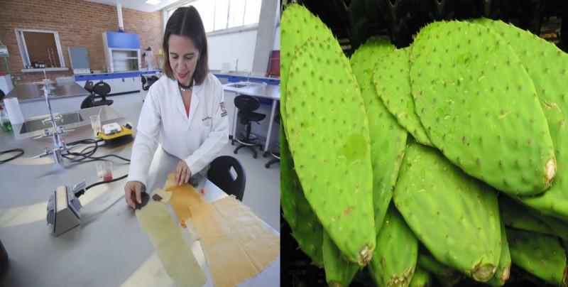 Con jugo de nopal, crean plástico biodegradable