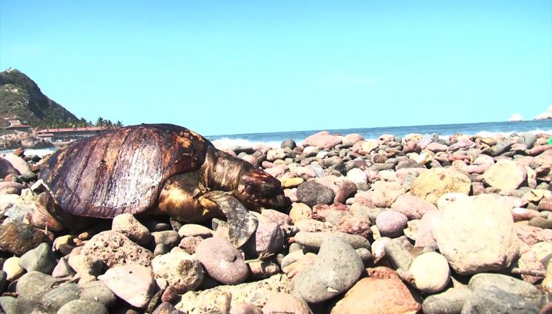 Aparecen muertas especies marinas