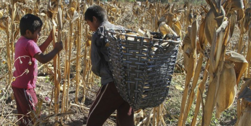 Impulsa México modelo para reducir trabajo infantil