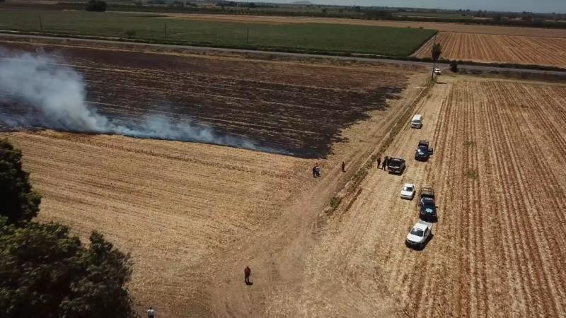 40 hectáreas de trigo afectadas por la quema de soca