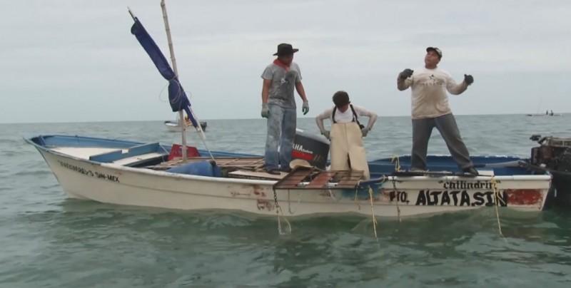 La pesca furtiva está frenada en bahías de Guasave