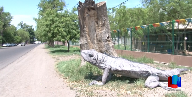Ya llegaron las iguanas