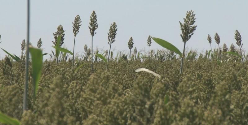 Inconformidad por reducción en programa de semilla