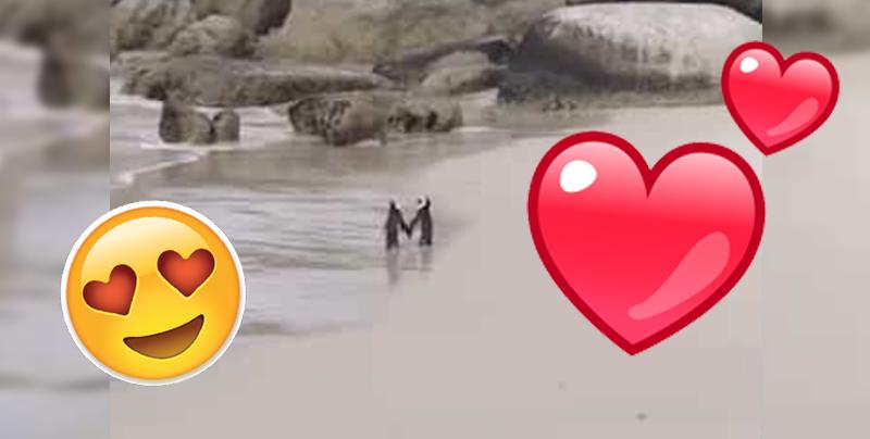 Estos pingüinos harán que vuelvas a creer en el amor
