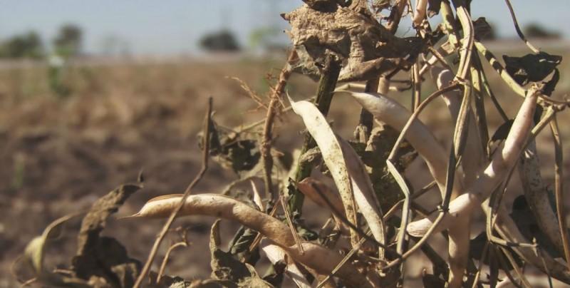 CAADES a favor de que se apoye la agricultura de subsistencia