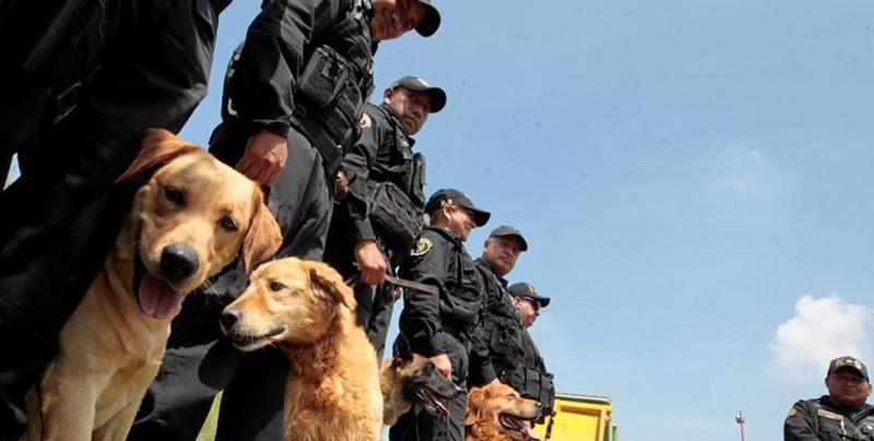 K9, la unidad canina que da protección en las peligrosas cárceles mexicanas