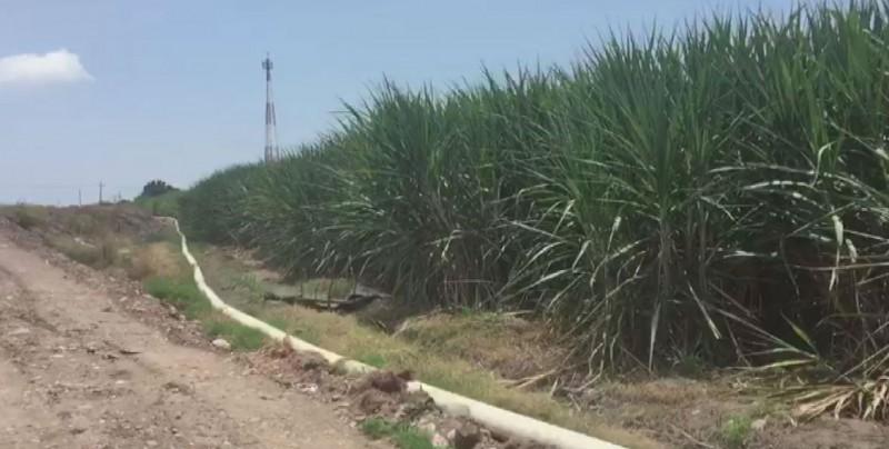 Gestiona CONAGUA volúmen adicional para caña de azúcar en Eldorado