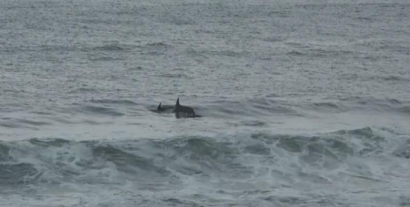 Avistamiento de delfines en Mazatlán