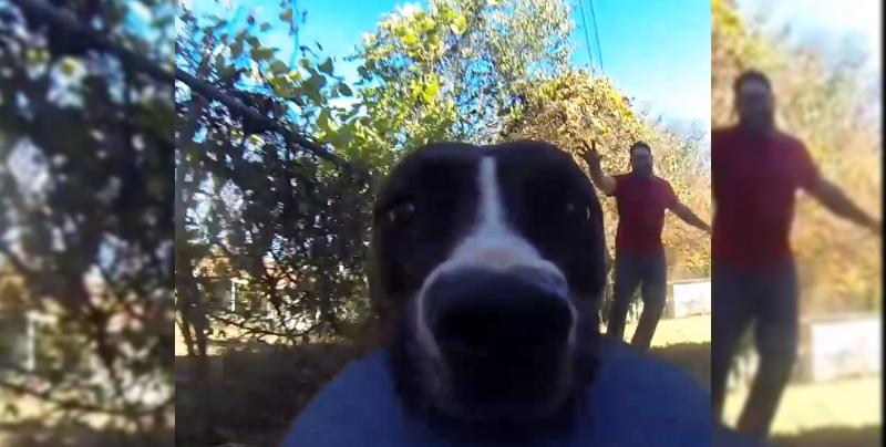 Esta perrita robándose una GoPro te robará el corazón