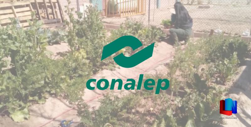 Nivel Plata logró CONALEP en concurso internacional
