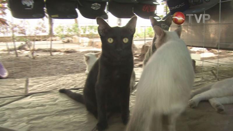 Cuida de 19 gatos en un puesto de la plazuela Obregon
