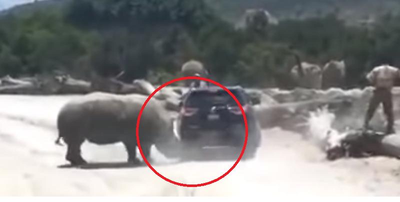Rinoceronte embiste a camioneta en Puebla