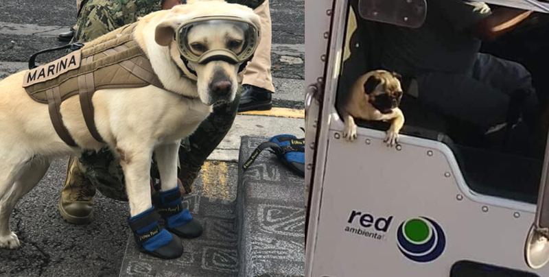 Estos perritos chambeadores harán que tu mascota te valore