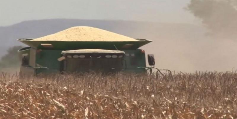 Esta semana podrían pagar a productores de maíz y trigo