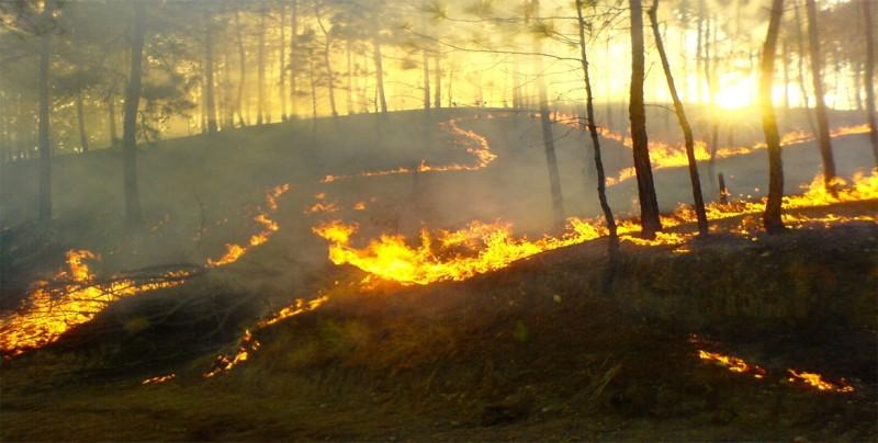 Bomberos progresan frente al incendio más grande de la historia de California