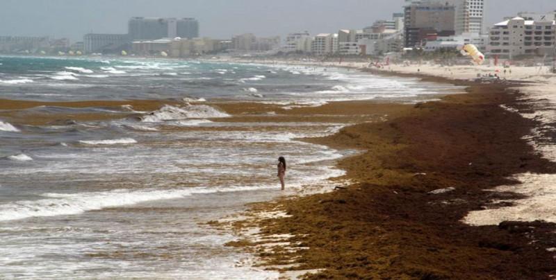Sargazo tiene impacto negativo; no disminuye turismo