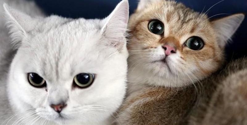 Conoce estas 5 cosas curiosas de los gatos