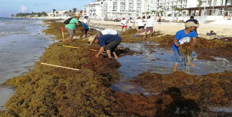 Sargazo en Cancún será desviado con mallas ecológicas