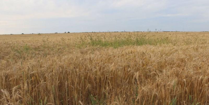 Exhorta la CNC  a planear el próximo ciclo agrícola y propone un plan B