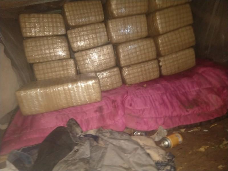 Aseguran 170 kilos de marihuana en Navolato