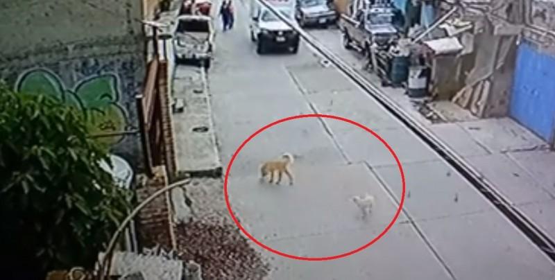 Exhiben a trabajador de famosa empresa que atropelló a un perro