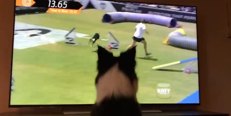 Perrita se emociona al verse a sí misma ganar un concurso