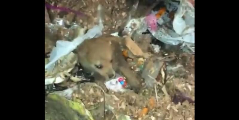 Rescatan a perrita que pasó por el triturador de basura