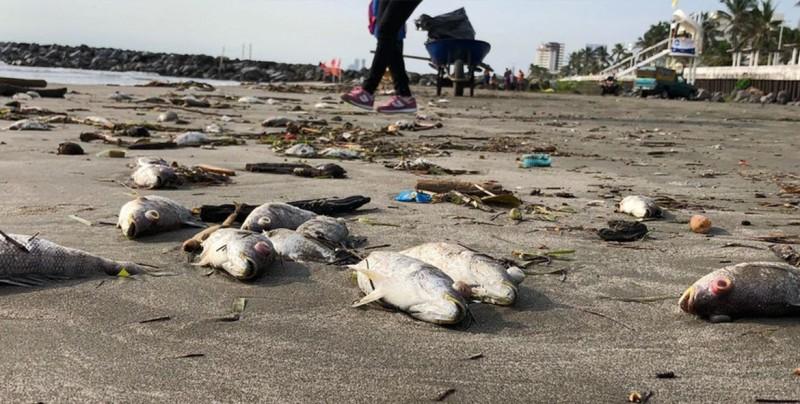Encuentran cientos de peces muertos en Veracruz