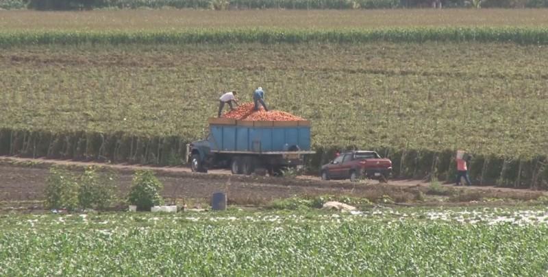 Riesgos al reiniciar las negociaciones para la suspensión del Dumping al tomate mexicano