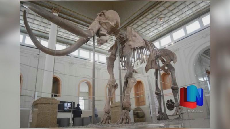 """Llega a Trincheras """"El Gigante de la Prehistoria"""""""