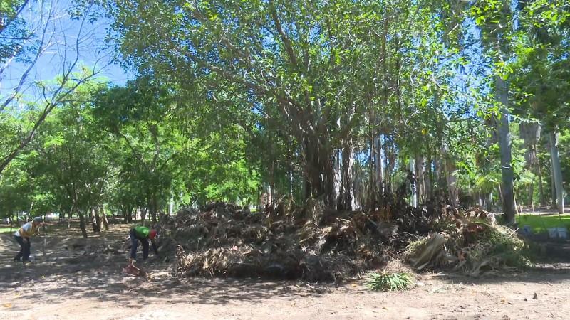 Prenden fuego a varios árboles del Jardín Botánico